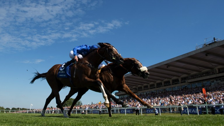 Thriller: Ulysses (noseband) just edges out Barney Roy in a titanic tussle in the Coral-Eclipse
