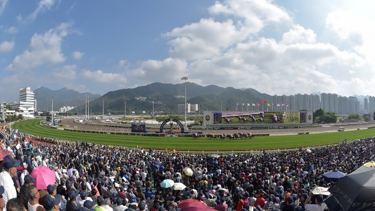 Spicy Sure: the one to be with at Sha Tin