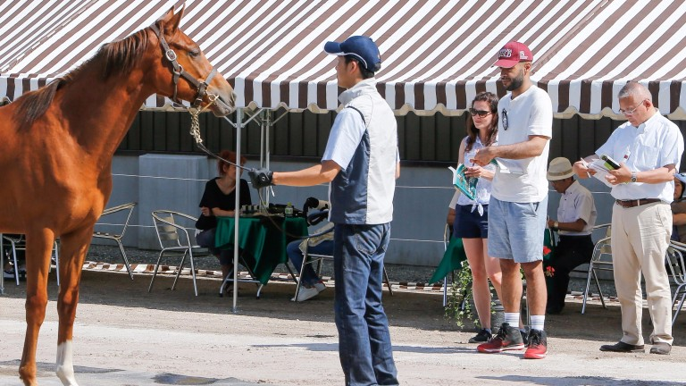 Sheikh Fahad Al Thani (red cap) casts his eye over a King Kamehameha filly out of Argentinean Grade 1 winner Miss Serendipity, flanked by Hannah Wall and his Japanese racing manager Ko Saito