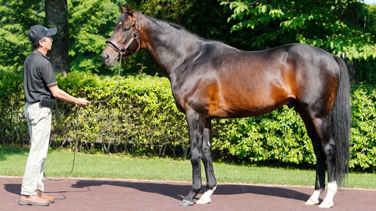 Deep Impact: only a handful of international breeders have been able to send mares to him