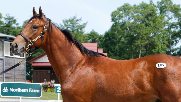 The Deep Impact colt out of Listen bought by Hajime Satomi for ¥270 million