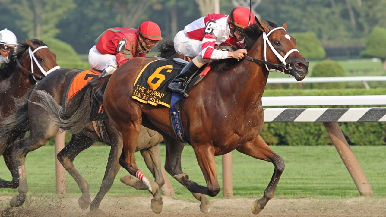 monkey betting terms for horse