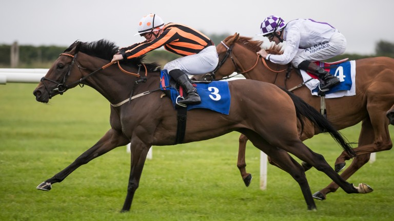 Flying Fairies and Gary Carroll give John Oxx his sixth win in Roscommon's Lenebane Stakes