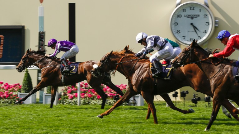 Highland Reel: winner of the Prince of Wales's Stakes and Breeders' Cup Turf