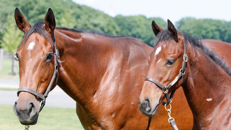 Elusive Wave with her Deep Impact colt who topped the foal session of the JRHA Sale on Tuesday