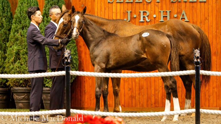 Gentildonna's sister Donna Attraente in the JRHA sales ring as a yearling