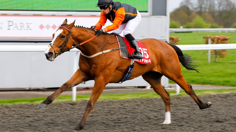 Big Country: four-year-old is among the leading contenders for the John Smith's Cup