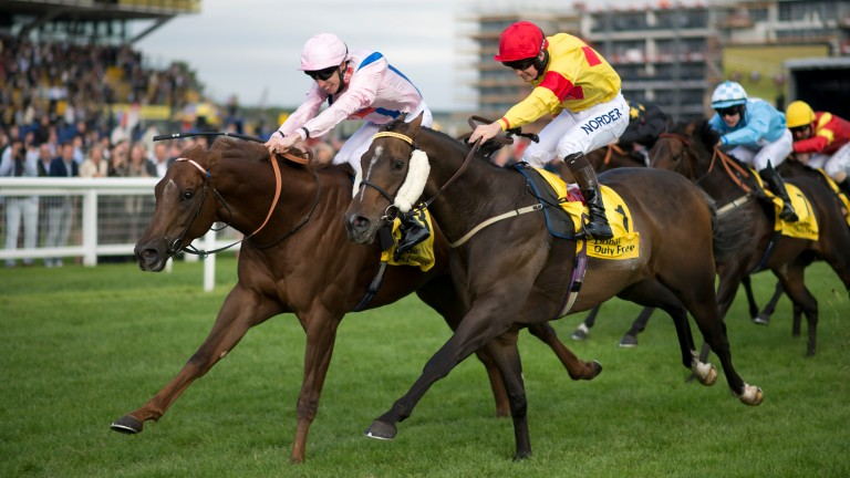 Cotai Glory: can regain the winning thread at York