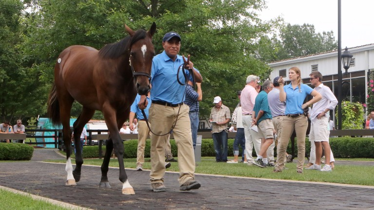 The Medaglia D'Oro filly knocked down to Oxo Equine for $1 million