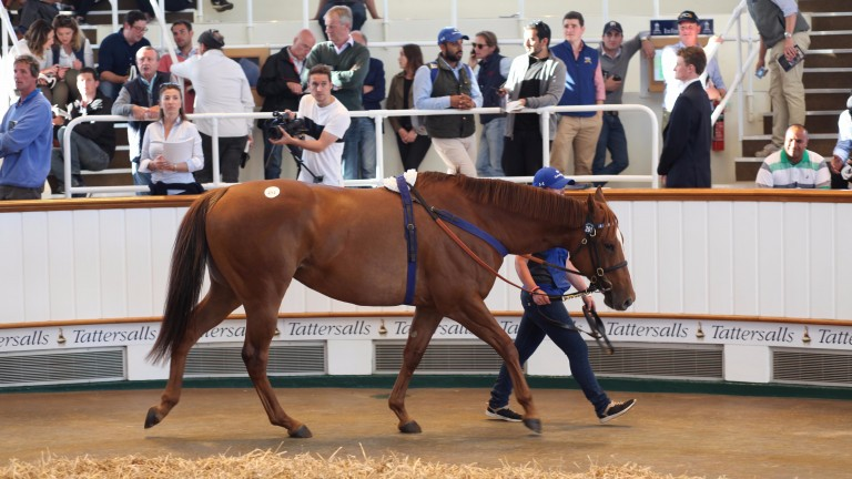 Time Check in the Tattersalls ring before selling to Badgers Bloodstock for 300,000gns