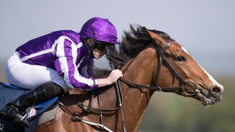 Minding: Aidan O'Brien has revealed that the seven-time Group 1 winner has been retired