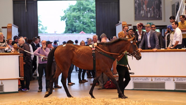 Jewel House in the Tattersalls ring before selling to Abdulatif Hussain Al-Emadi for 215,000gns