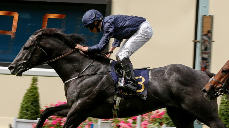 Caravaggio, Aidan O'Brien's flying machine, takes on his elders in the July Cup