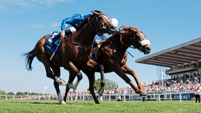 Barney Roy (left) and Ulysses (far side) are due to run at Ascot this weekend
