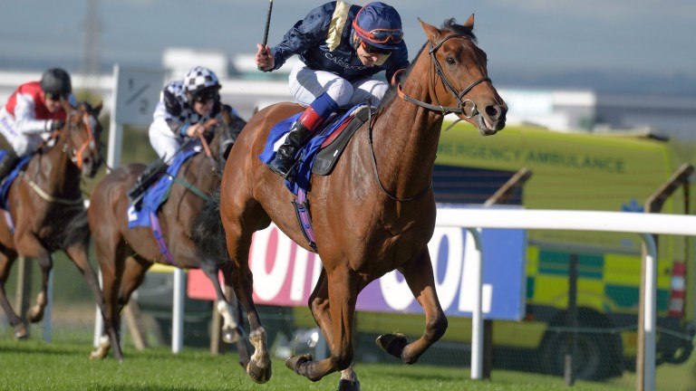 Mount Moriah: has earned this step up in class says his trainer