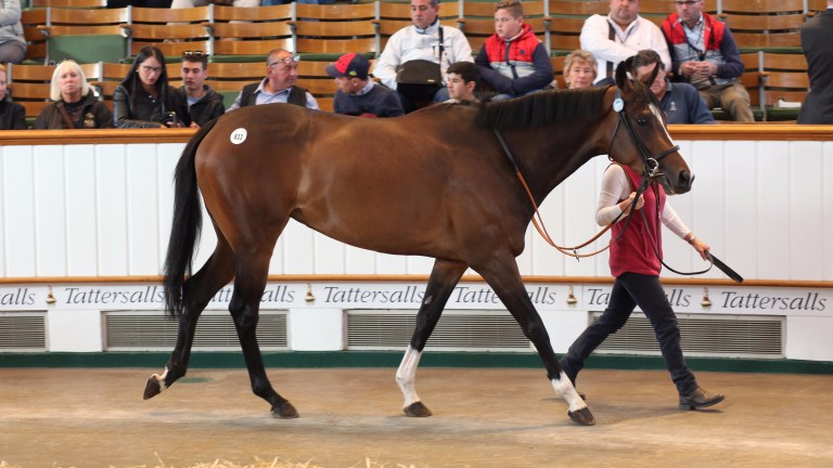 Lot 833: Asanta Sana, the daughter of Galileo fetched 330,000gns from Rabbah Bloodstock