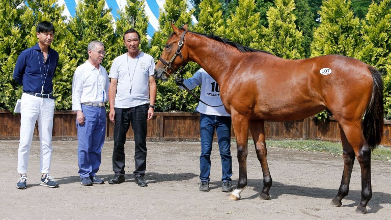 Hajime Satomi with his Deep Impact colt out of Group 1 heroine Listen