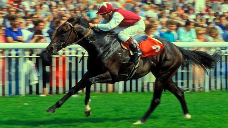 Ajdal wins the 1987 William Hill Sprint Championship (now the Nunthorpe) at York under Walter Swinburn