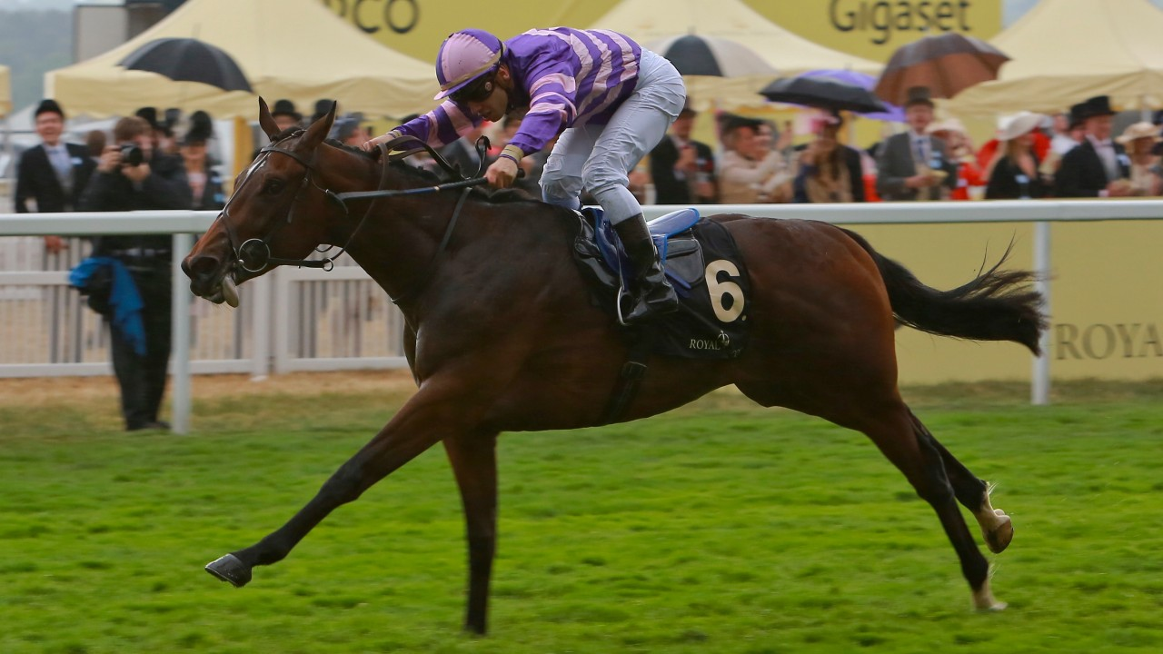Racing gems to be found at September Yearling Sale