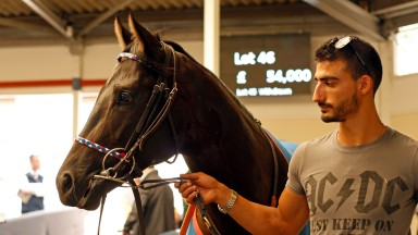 Lot 46: Black Orange makes his way around the Ascot sales ring before fetching £54,000 from Debbie Mountain