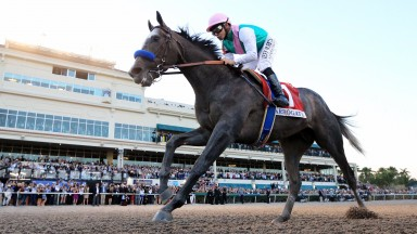 Khalid Abdullah's superstar Arrogate is back in action this weekend