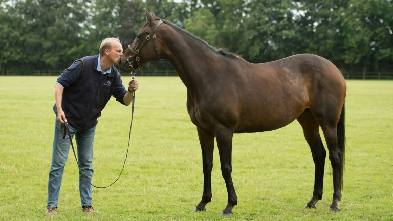 Ed Dunlop is reunited with his wonder mare Ouija Board at Stanley House Stud