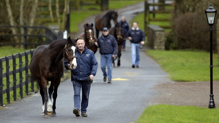 Sadler's Wells leads his record-equalling son Galileo on a walk at Coolmore, followed by the patriarch's other sons Montjeu and High Chaparral