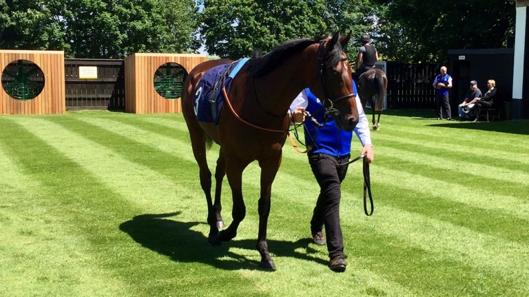 The gorgeous Glorious Journey before winning at the July course.