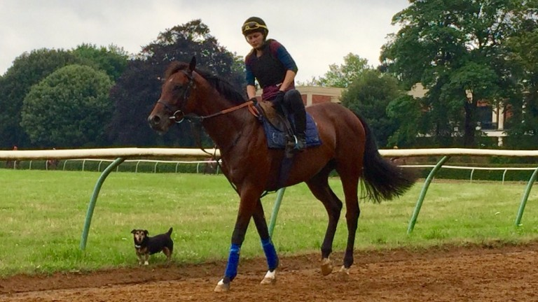 Eyes on the prize : Expert Eye and Sir Michael Stoute's dog Duke at the top of Long Hill
