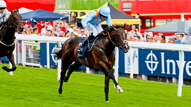 De Bruyne Horse: closely related half-sister will be offered at the Tattersalls Ireland Ascot Yearling Sale