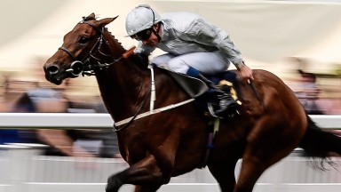 Permian, winner of the King Edward VII Stakes, could return to Ascot next Saturday
