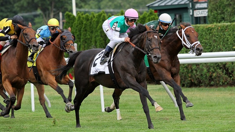 Flintshire (pink cap): the five-time top-level winner stood his first season at Hill 'n' Dale in 2017