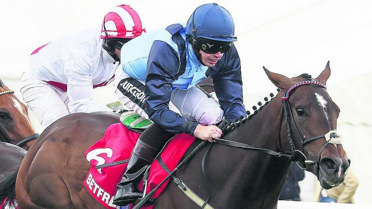 Danzeno: successful in the main race at Beverley on Tuesday