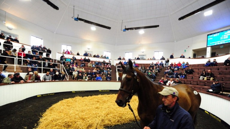 Tattersalls Ireland will host its inaugural May Store Sale next month