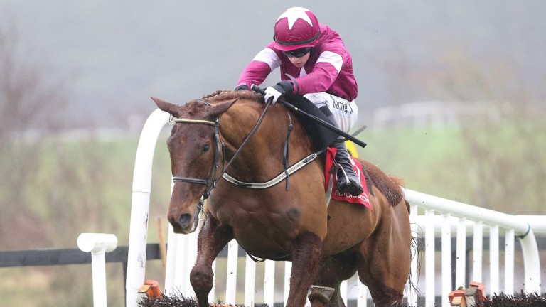 Balko Des Flos has a great chance of success in the Plate
