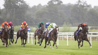 Havana Go (far left): beaten just over three lengths in decent maiden won by Mattymolls Gaga (right)