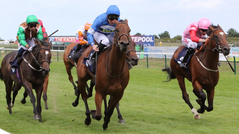Three-year-old Millie's Kiss, mistakenly racing as stablemate Mandarin Princess in a two-year-old race, is a 50-1 'winner' at Yarmouth