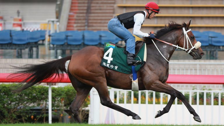 Igugu: her first foal is in training with Hugo Palmer