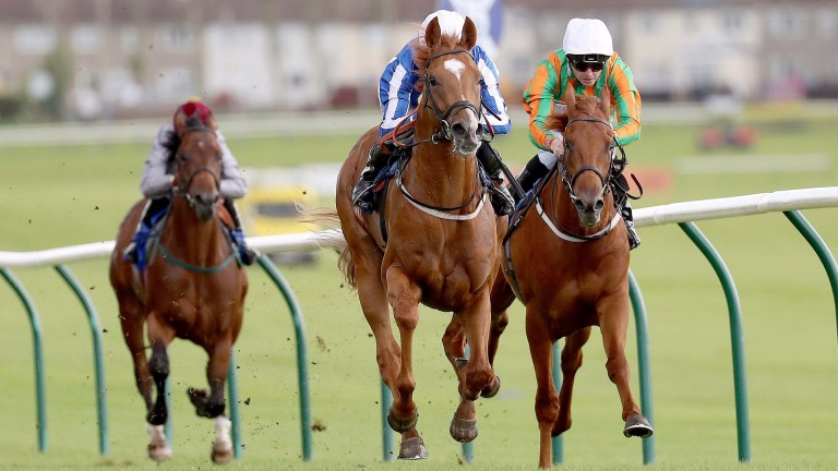 New Show (centre) runs out a convincing winner at Ayr