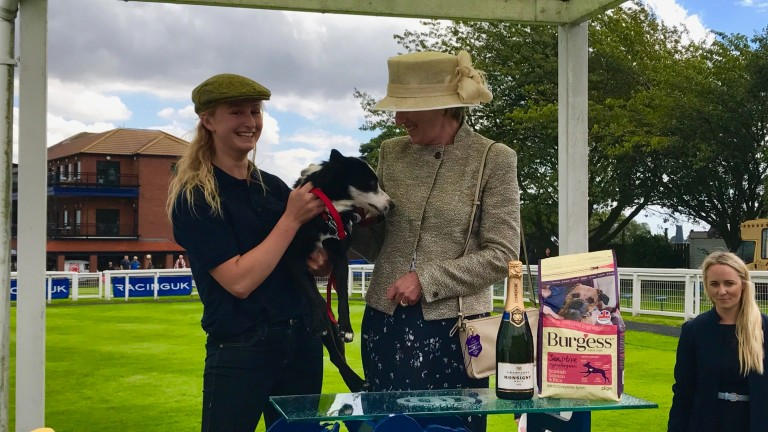 Danielle Mooney and her collie Beau on the winner's podium