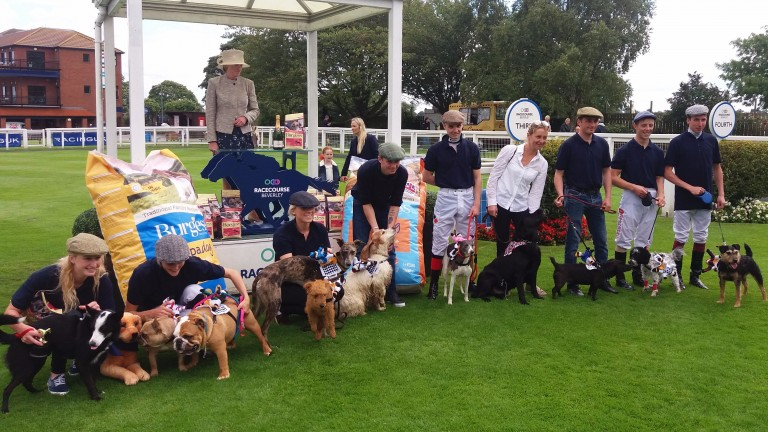 The competitors pose for the camera after the inaugural running of the Bark de Triomphe