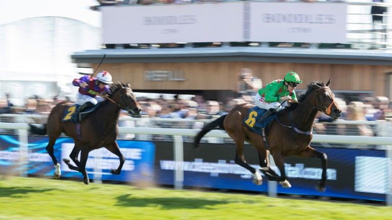 Never Surrender: heads our Goodwood entries on Wednesday