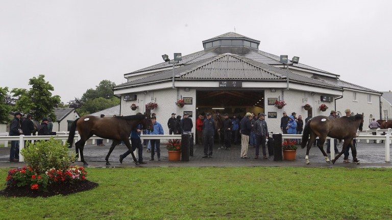Tattersalls Ireland: what gems might the catalogue for the August National Hunt Sale contain?