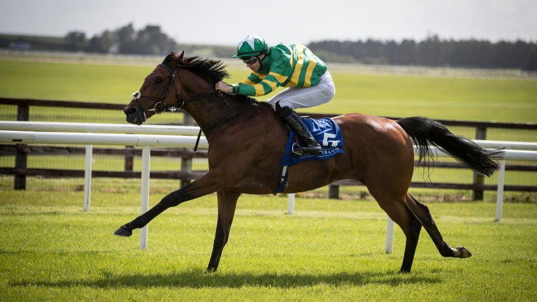 Tigris River: won the Galway Hurdle for Joseph O'Brien and Barry Geraghty
