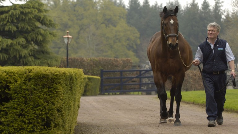Danehill Dancer: the champion sire of 2009 pictured at Coolmore