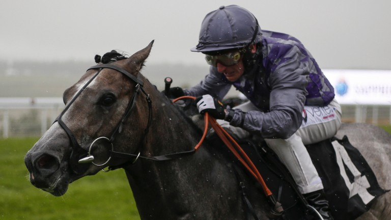 Gallant Grey: the Karl Burke-trained Havana Grey gains a first Group-race success in the Molecomb Stakes under PJ McDonald
