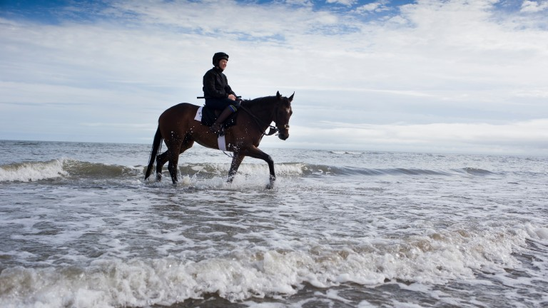 Making a splash: Strait Of Zanzibar (Pauline Condon) at Laytown before racing
