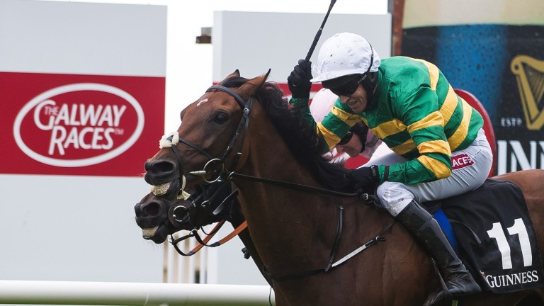 Close call: Tigris River and Barry Geraghty come with a late rattle to take the Galway Hurdle