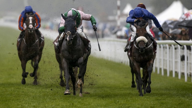 Goodwood: Here Comes When (left) downs odds-on favourite Ribchester in an epic battle for the Sussex Stakes