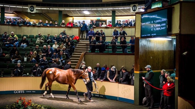 Goffs: four mares will be dispersed from Ballymacoll Stud at this year's November Sale